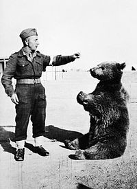 200pxwojtek_the_bear